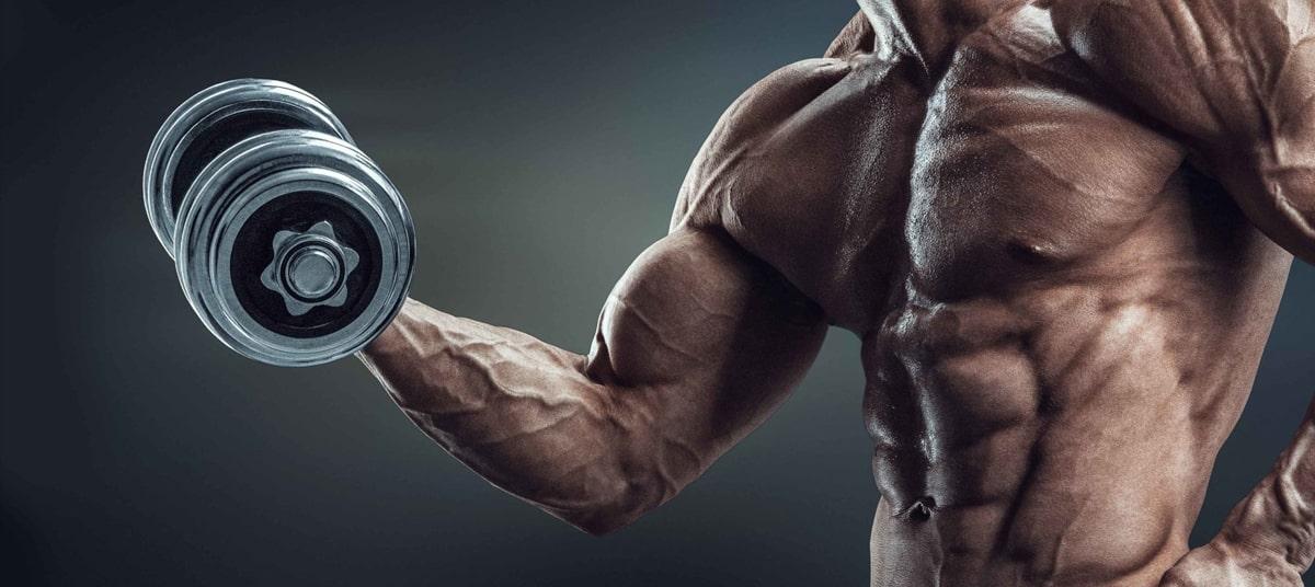 Musculation des biceps