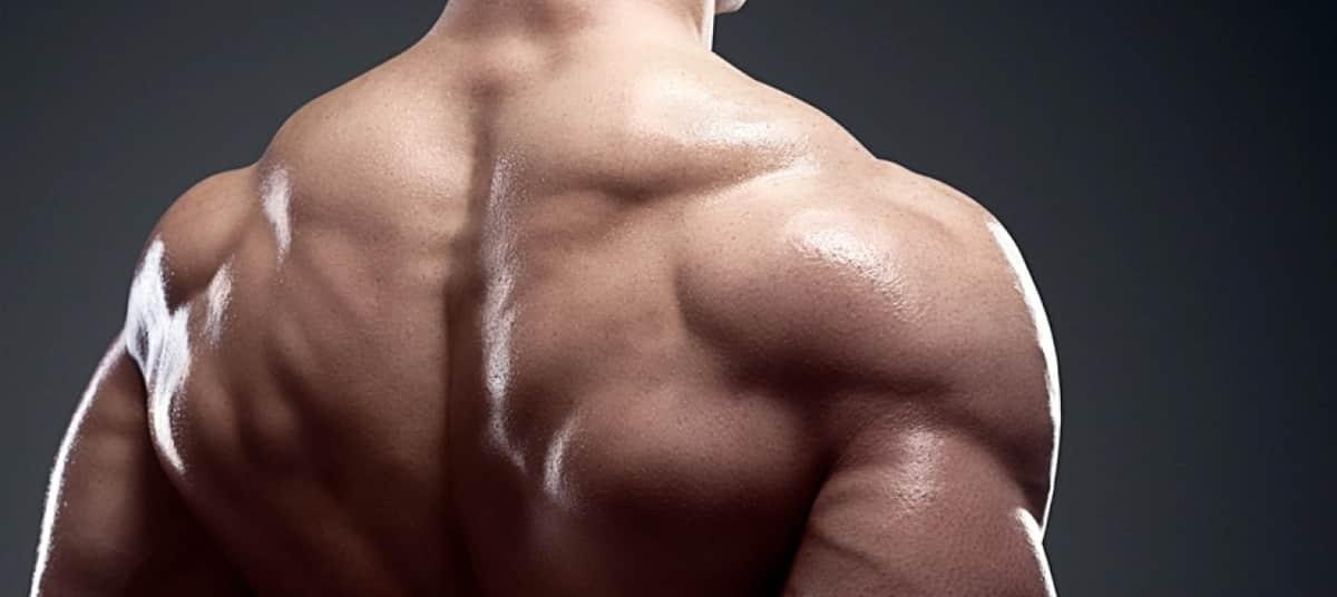 Musculation des trapèzes