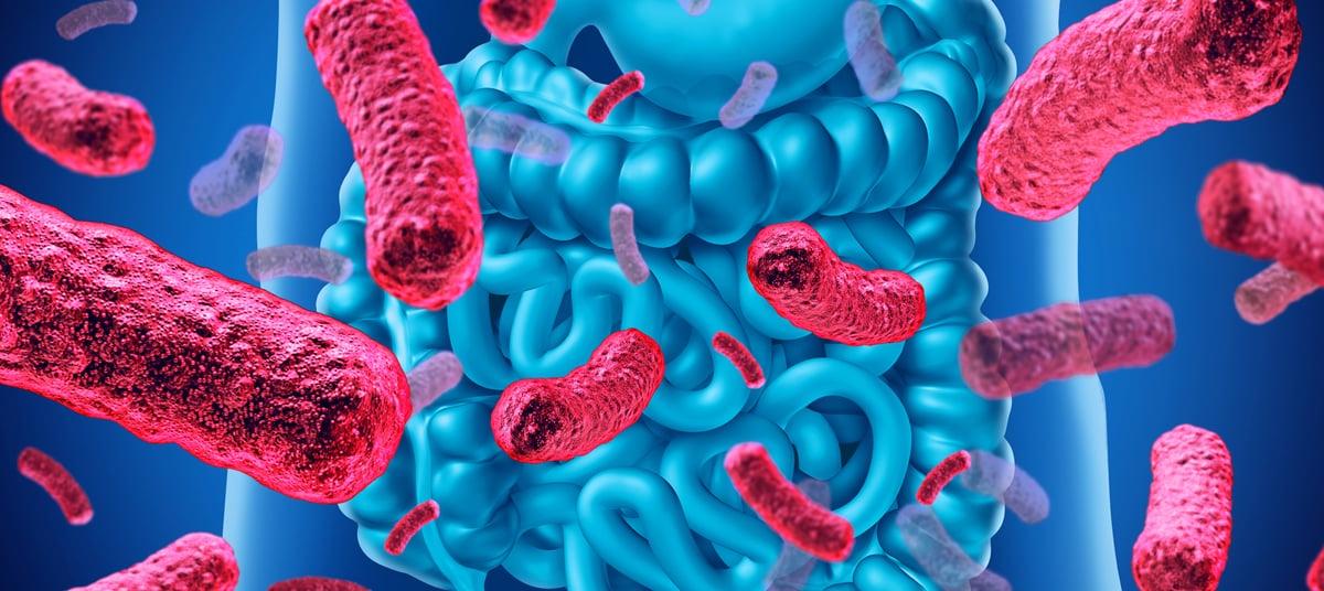 Prébiotiques, probiotiques et musculation
