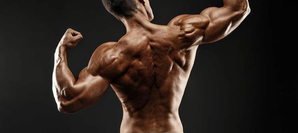 Programme de musculation dos large
