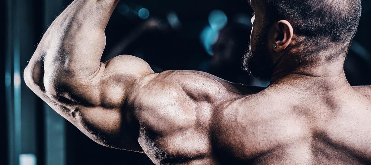 Programme musculation spécial bras