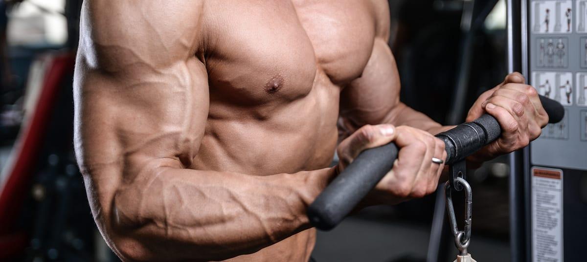 Les avantages de l'entrainement Full Body en musculation
